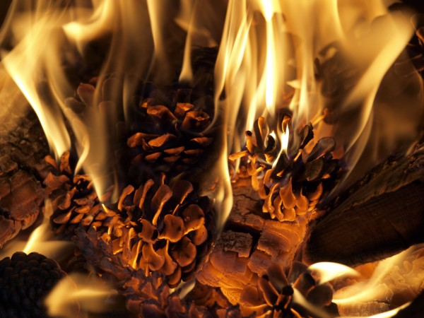Image result for Burning Pine Cones
