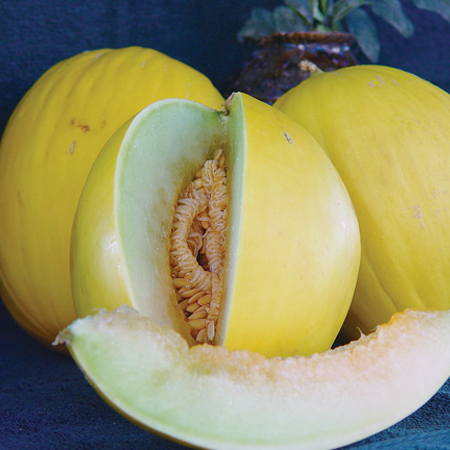 Mixed_Melon_Canary_Tweety_DPSeeds