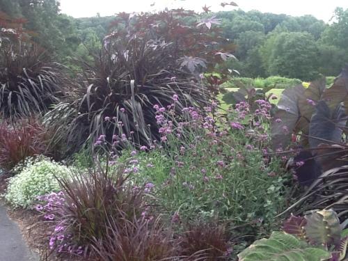 Brilliant black garden.