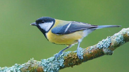 Bird-on-a-branch_1920x1080