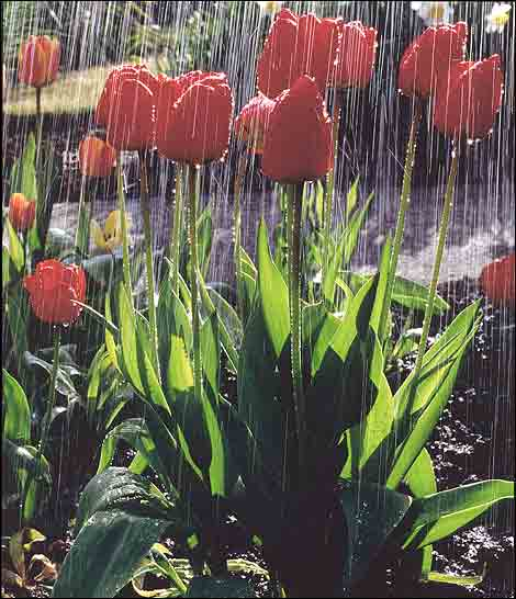 april_showers_pic2