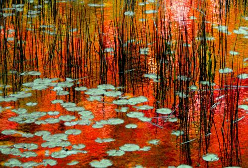 autumn-reflections-trevor-slauenwhite