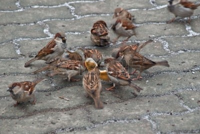 2593103-sparrows-bread