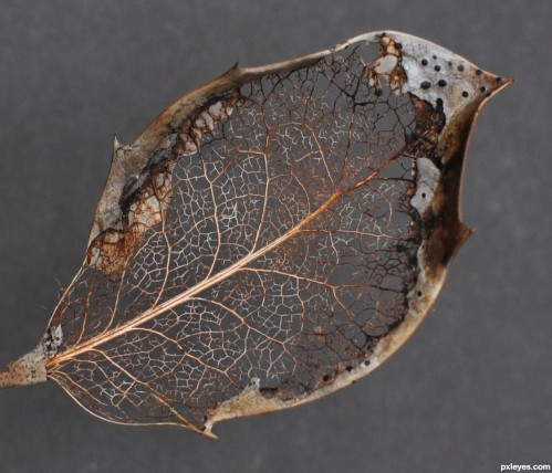 Decaying-Leaf_hires