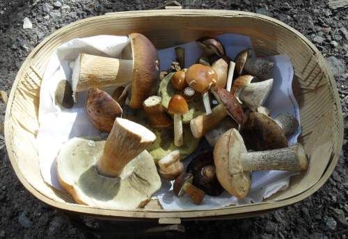 simons-mushroom-article-basket
