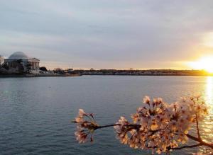 blossum-sunset