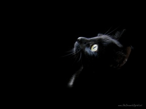 Black-cat-head_large
