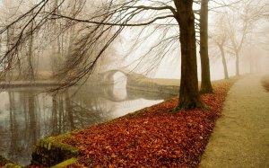 autumn_fog_park-wide