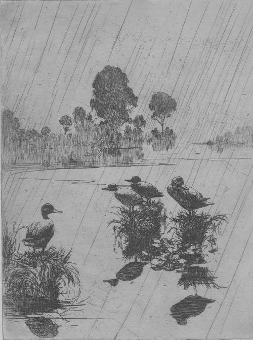 Benson Ducks In The Rain