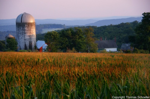 Schoeller-Tanners-Farm-Warren-Connecticut-litchfield-hills-cornfield