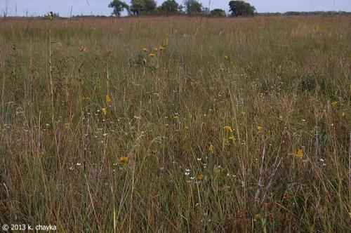 parnassia-glauca-american-grass-of-parnassis_0904_191646