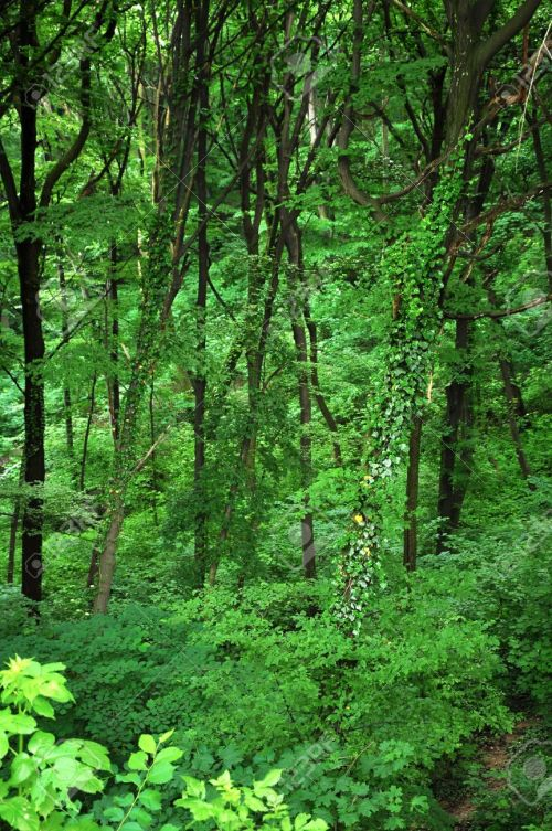 7220392-Forest-landscape-at-the-begining-of-spring-Green-trees-and-a-narrow-road-through-the-woods--Stock-Photo