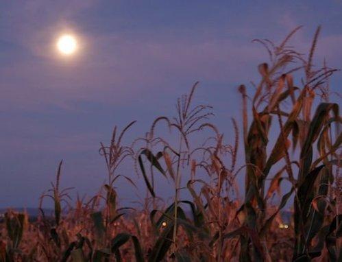 harvest-moon-nasajpg-9908dfcc7c8bcae2