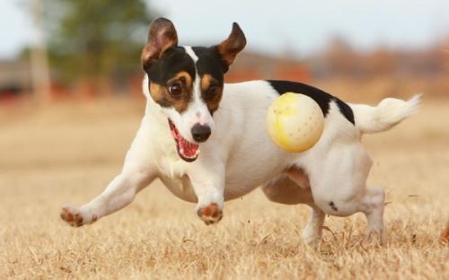 dog-with-ball-1