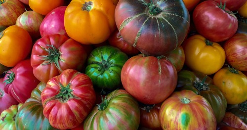 heirloom-tomatoes-1