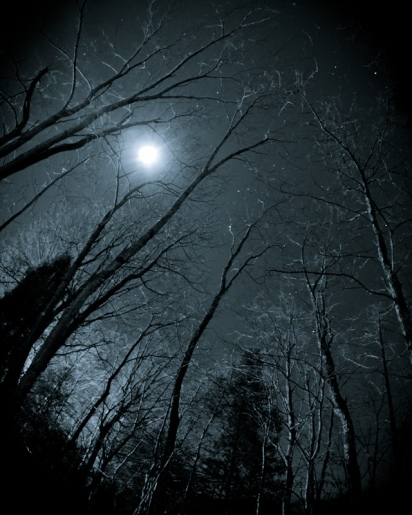 full moon through bare-limbed winter trees