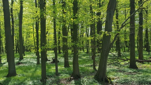 forest-2208284_1280